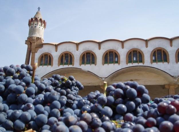 do_terra_alta_fruits_de_la_terra
