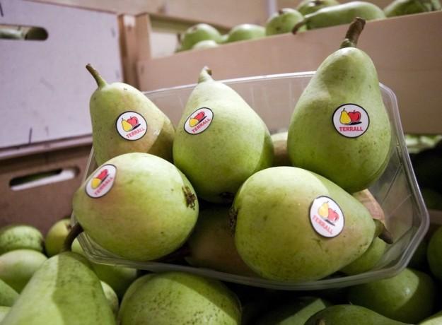 dop_pera_de_lleida_fruits_de_la_terra