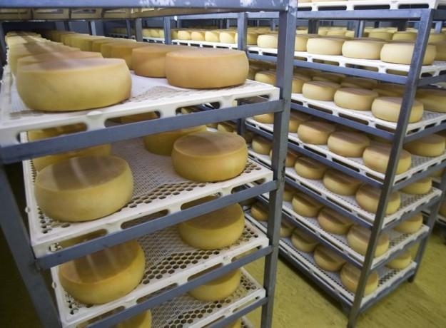 formatge_de_lalt_urgell_de_llet_fresca_del_pirineu