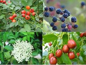 fruits prullans