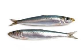 sardines_crop380w