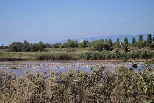 9a edició de la Marató ornitològica cooperativa al Delta del Llobregat
