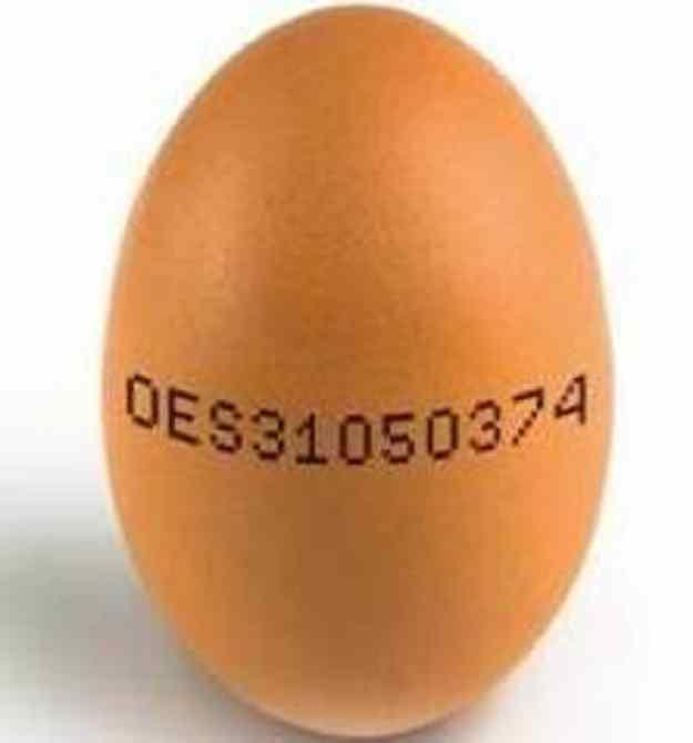 El DNI dels ous